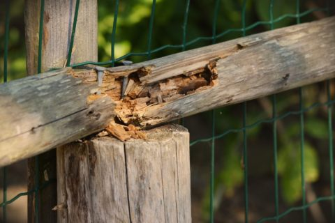 wood fence repair clearwater