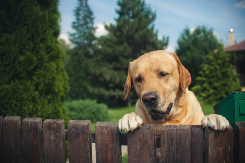 fencing to keep dogs in